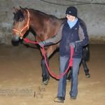 Spanisches Pferd in Deutschland