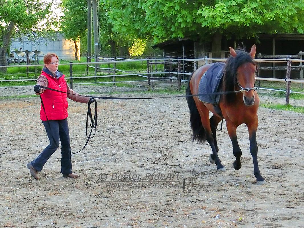 Heike und Rayo Trab mit Reitkissen an der Longe 2015_05_05